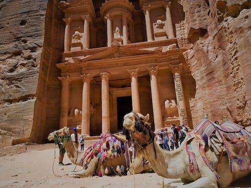 Kostenloses Stock Foto zu alt, arabian kamel, arabisch