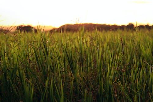 Fotobanka sbezplatnými fotkami na tému hracie pole, leto, slnečné svetlo, slnko
