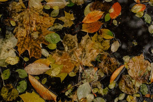 Assorted autumn leaves lying on wet asphalt road
