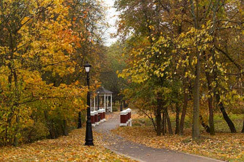 Pathway in autumn park leading to public gazebo