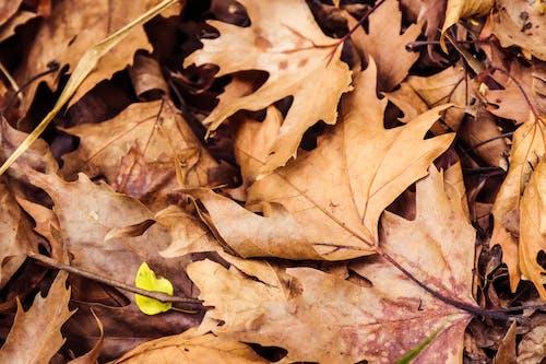 Fotobanka sbezplatnými fotkami na tému farby jesene, jesenná farba, jesenné lístie, jesenný les