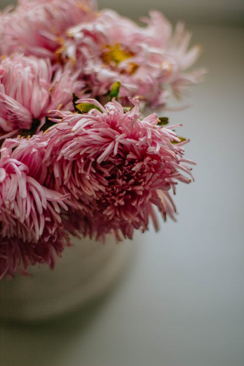 Tender bouquet of pink chrysanthemum on white surface