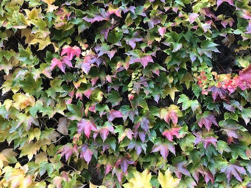 Kostnadsfri bild av höstfärger, leafs, natur