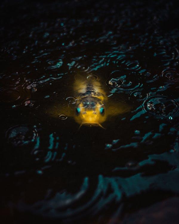 Yellow Fish Underwater