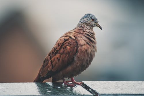 Brown and Gray Coated Bird