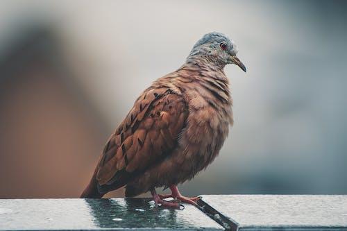 คลังภาพถ่ายฟรี ของ การถ่ายภาพสัตว์, ขน, ขนนก, ความชัดลึก