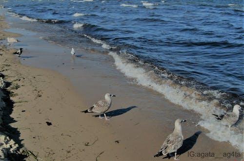 Kostenloses Stock Foto zu baltisch, blau, blaues meer, brechen der wellen
