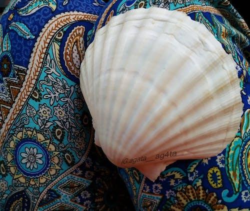 Fotobanka sbezplatnými fotkami na tému Baltské more, čierna mušľa, dary mora