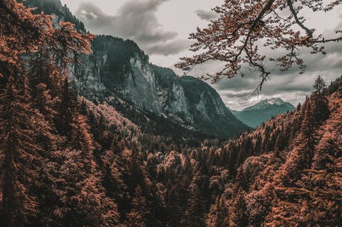 Landscape Photo of Forest Across Mountains
