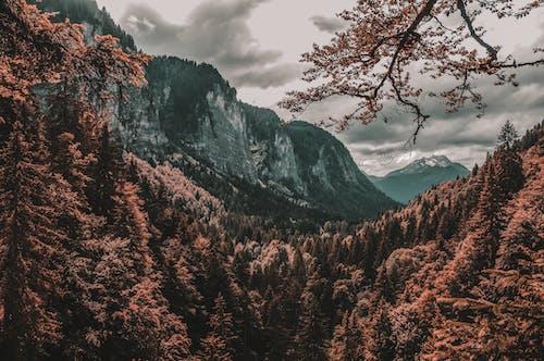 Бесплатное стоковое фото с вечнозеленый, горы, деревья, живописный
