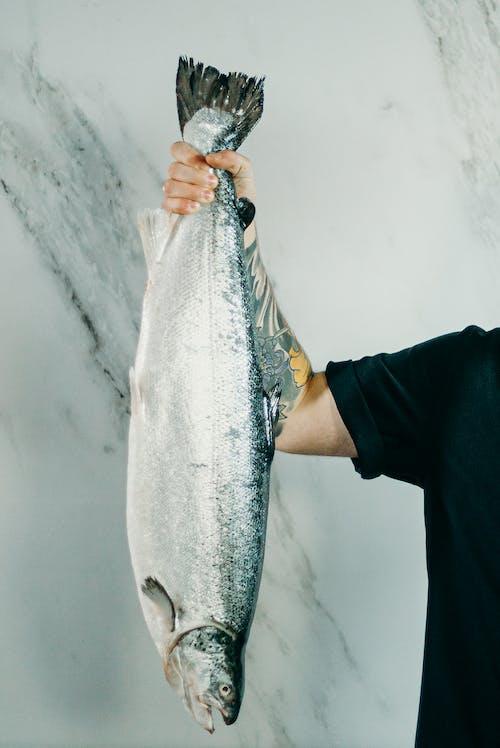 Gratis arkivbilde med dyr, fisk, fisk, fisk