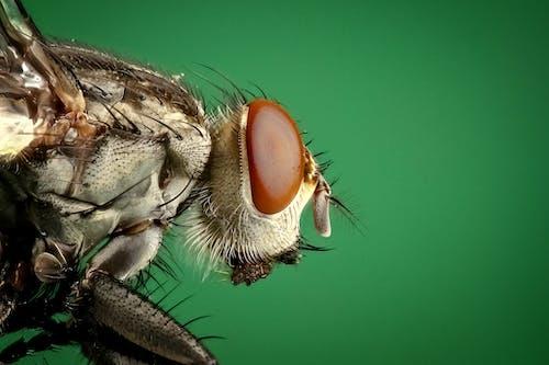 böcek, büyütme, compoud eye, haşere içeren Ücretsiz stok fotoğraf