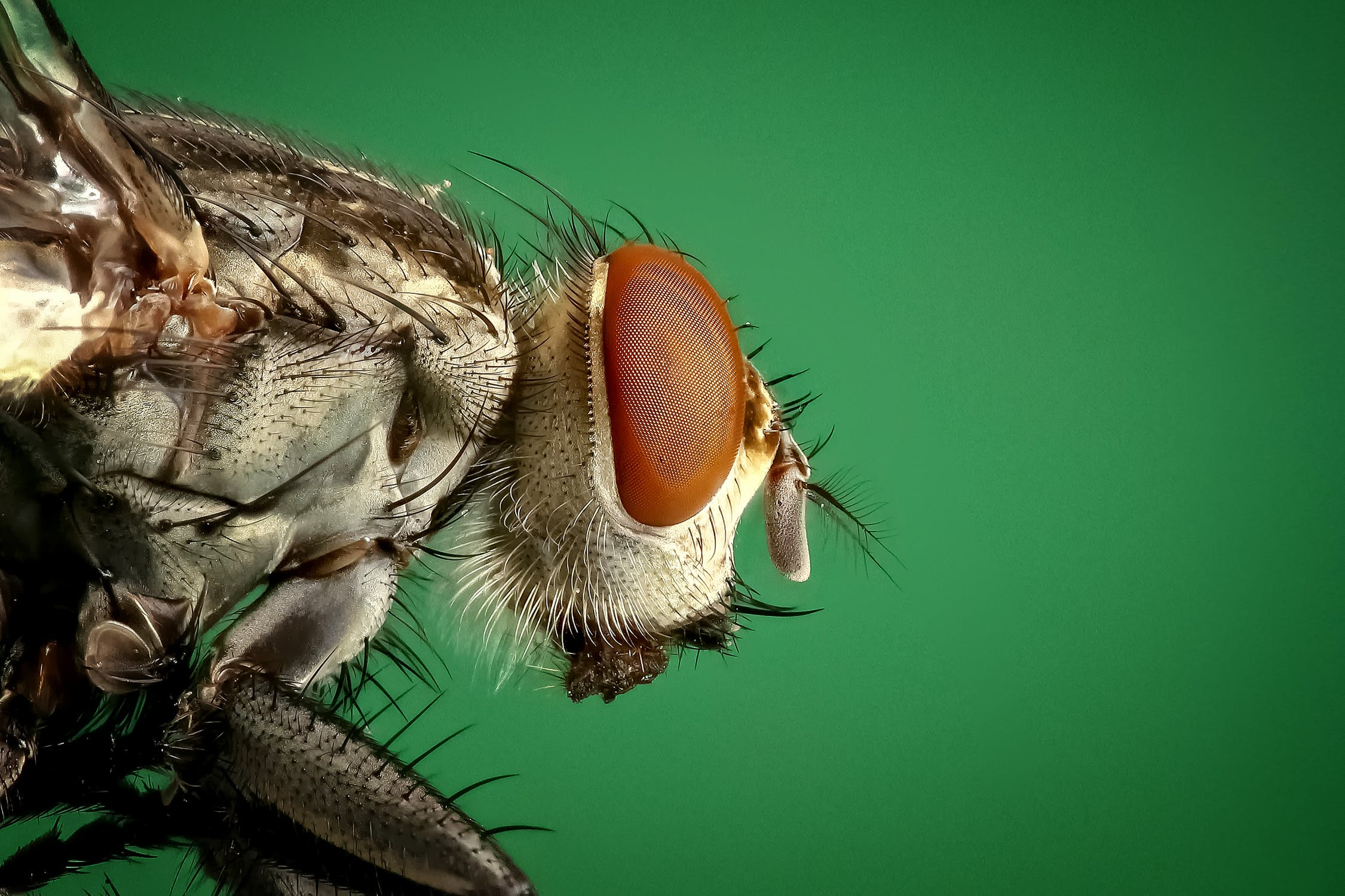 housefly-fly-insect-macro.jpg?auto=compr