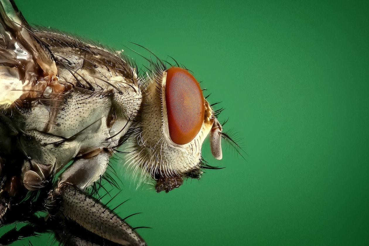 Berger Hargis Perimeter Pest Insect Control
