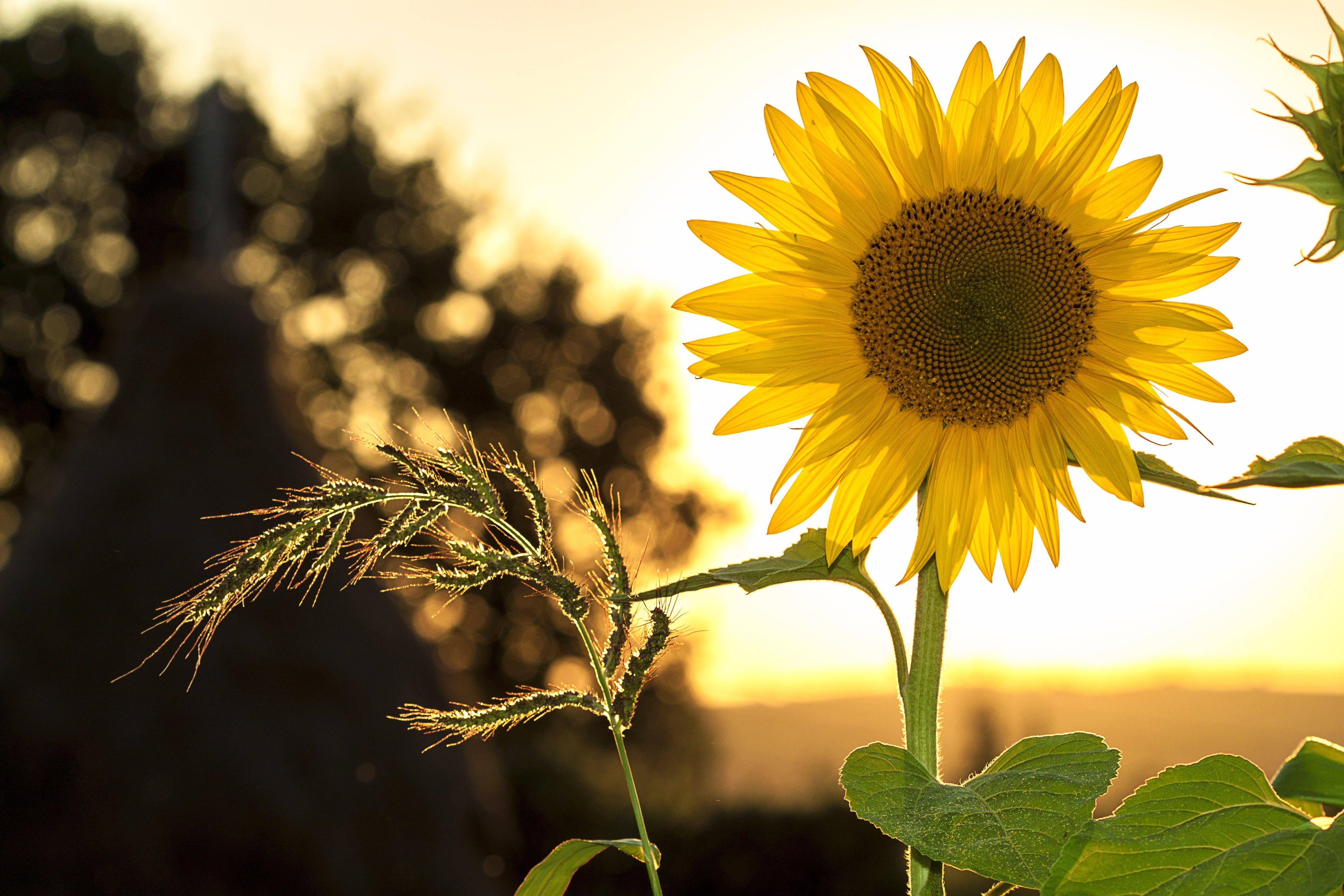 amarelo, ao ar livre, brilho do sol