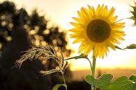 nature, sunset, summer