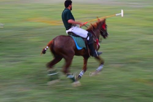 Foto d'estoc gratuïta de cavall blanc, cavall negre, les carreres de cavalls, muntar a cavall