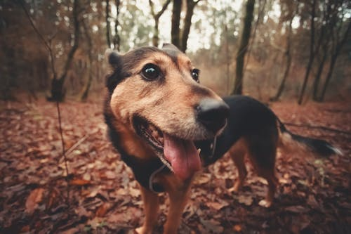 Gratis stockfoto met beest, canidae, close-up, depth of field