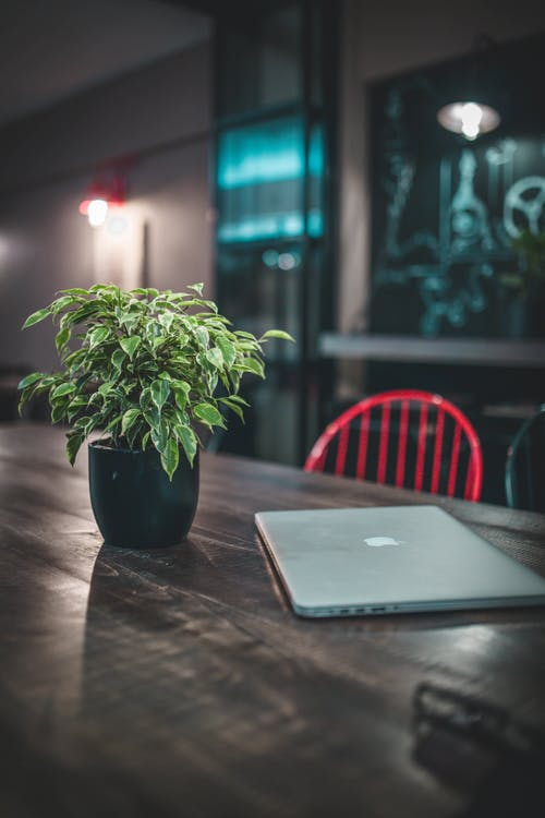 Silver Macbook Pro Near Green-leafed Plant on Table