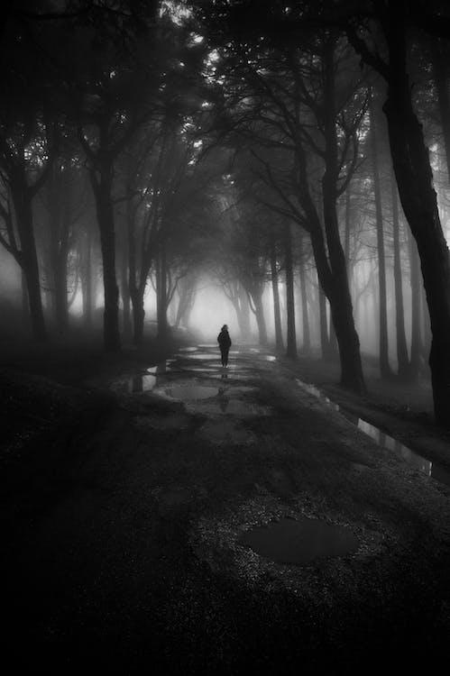 木々の間を歩く人のグレースケール写真