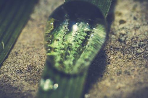 Close-up of Lizard on Grass