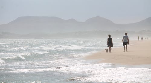 Free stock photo of beachside, wind