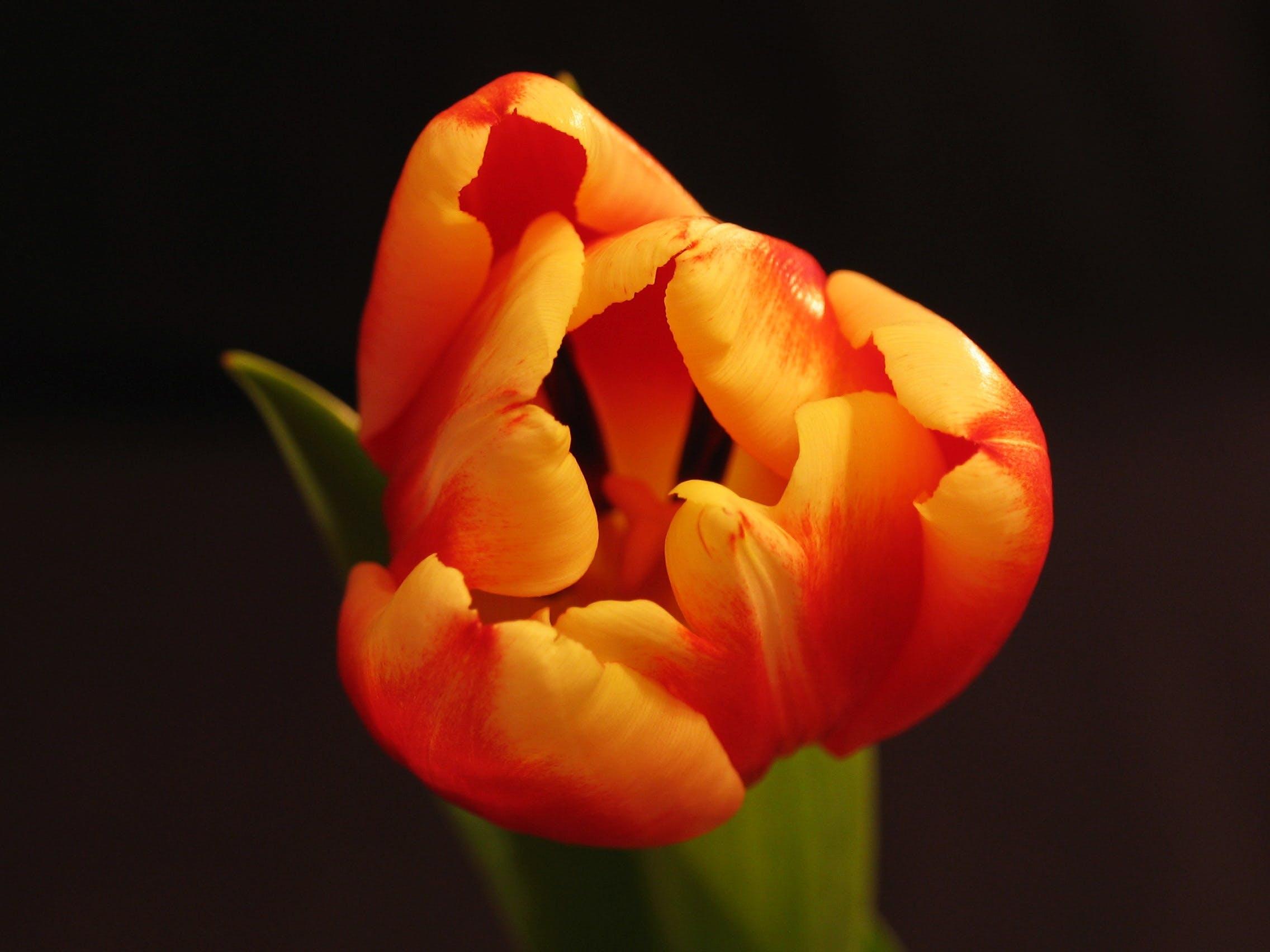 คลังภาพถ่ายฟรี ของ blosoom, กลีบดอก, ดอกไม้ฤดูร้อน, ต้นไม้
