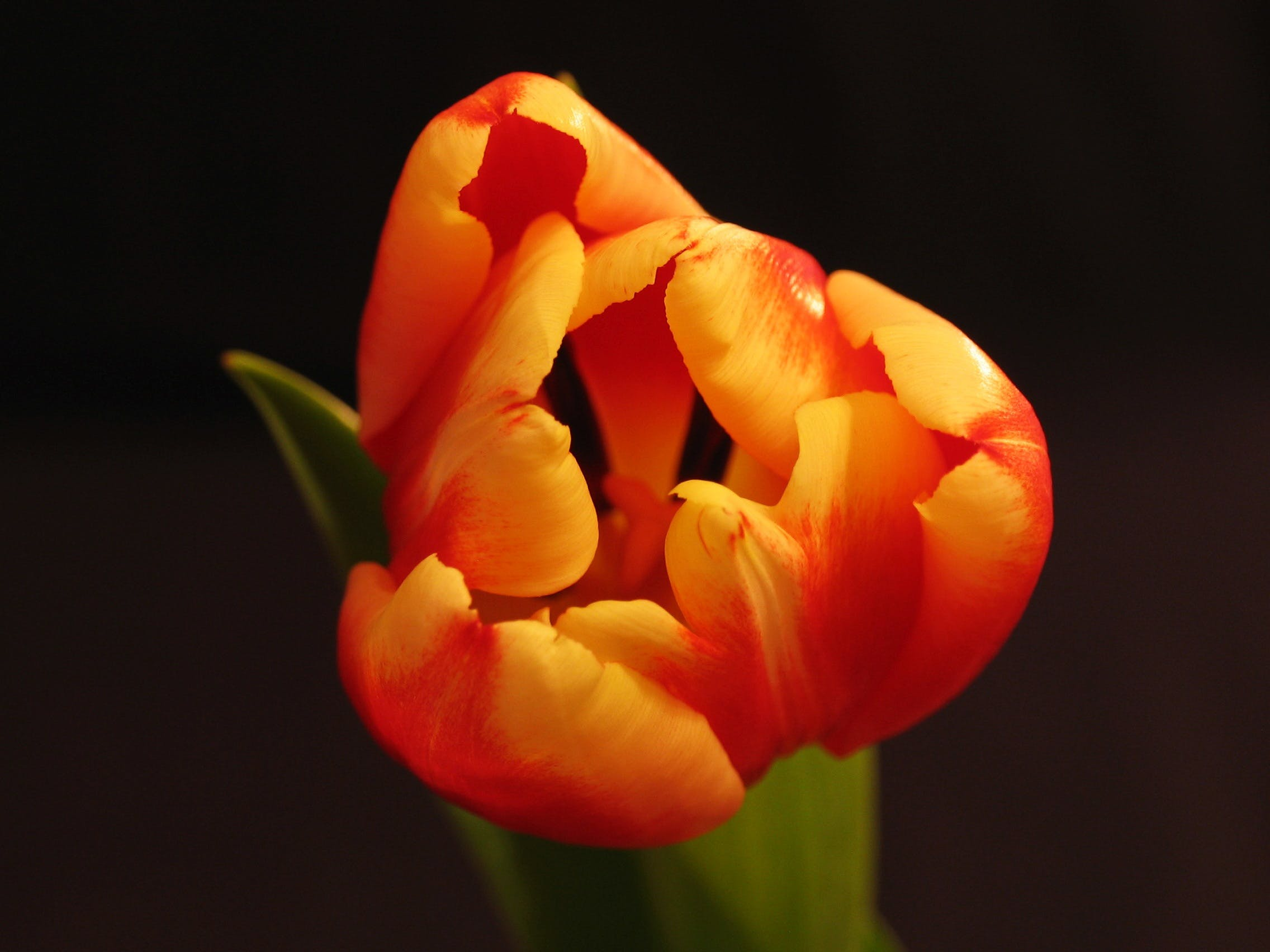 Free stock photo of nature, petals, plant, orange