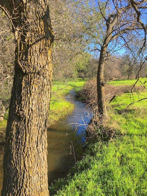Free stock photo of landscape, tree