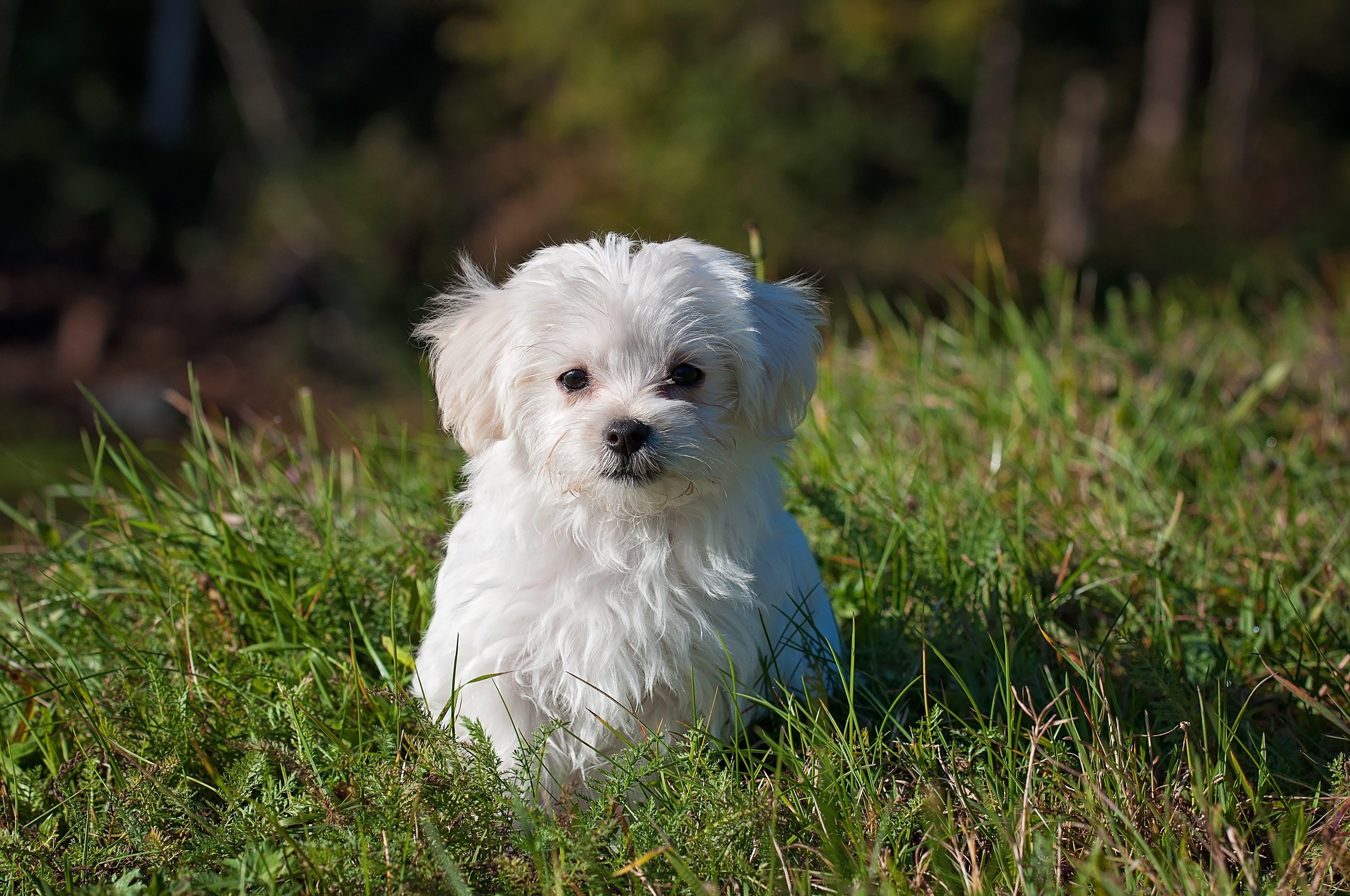 White Long Coated Dog on Grassland