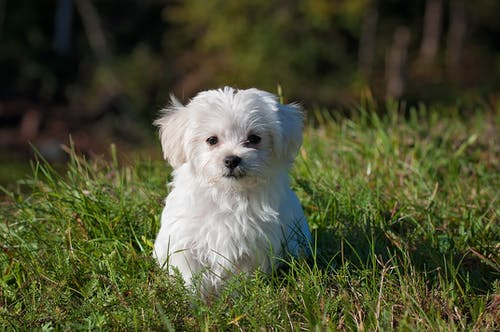 White Long Coated Dog on Grassland