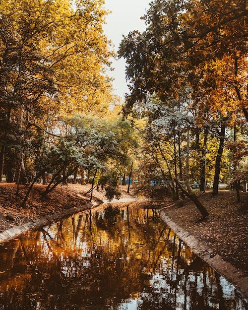 Darmowe zdjęcie z galerii z budapeszt, cichy, drzewa, dzień