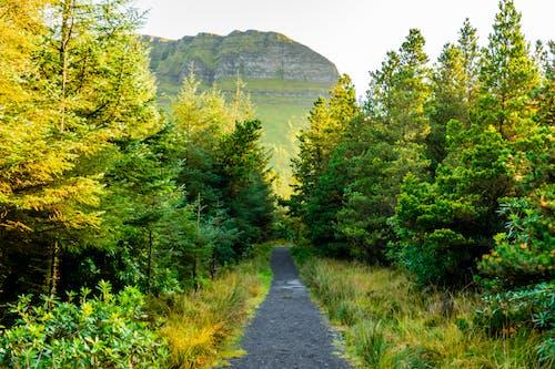Kostenloses Stock Foto zu berg, farbiger berg, gräser, herbstfarben