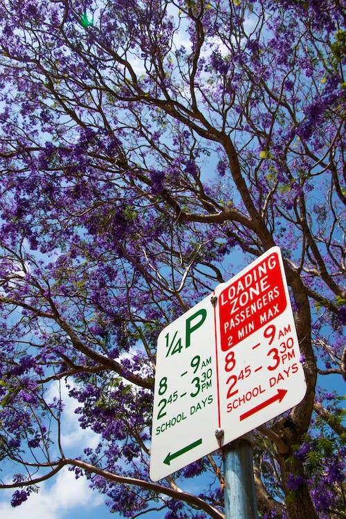Základová fotografie zdarma na téma fialová, květiny, podzimní nálada, přírodní