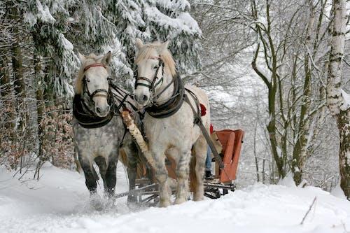 Photos gratuites de animaux, forêt, hiver, neige
