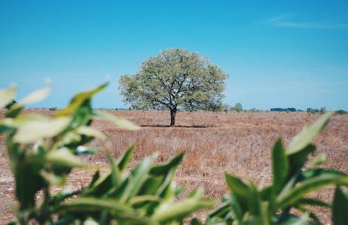 Imagine de stoc gratuită din afară, arbore, armonios, câmp