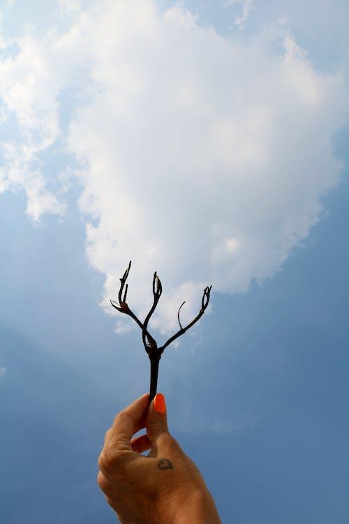 Imagine de stoc gratuită din cer, conceptual, crenguță, mână