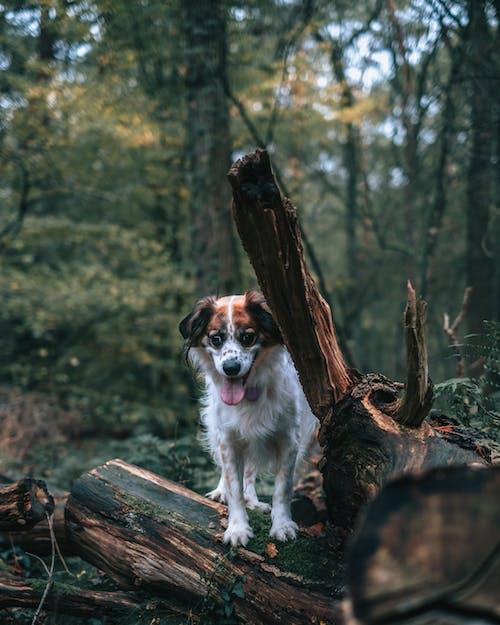 Gratis lagerfoto af dagtimer, dyr, dyrefotografering, hjemlig