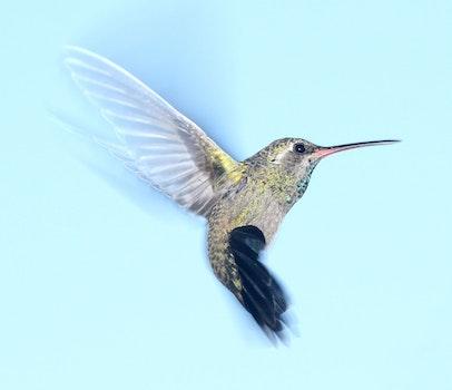 Free stock photo of nature, bird, flying, beak