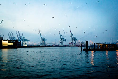 Free stock photo of birds, boat, cargo, cargo containers