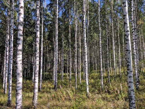 Free stock photo of beauty in nature, environment, Finland, forest