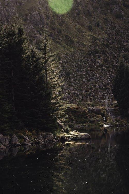 Free stock photo of dark background, dark nature, green, green tree