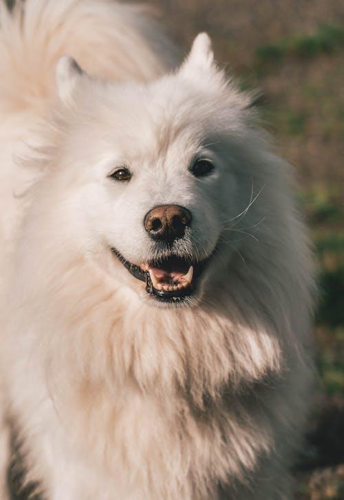 可愛的動物, 微笑, 快乐的狗, 快樂 的 免费素材照片