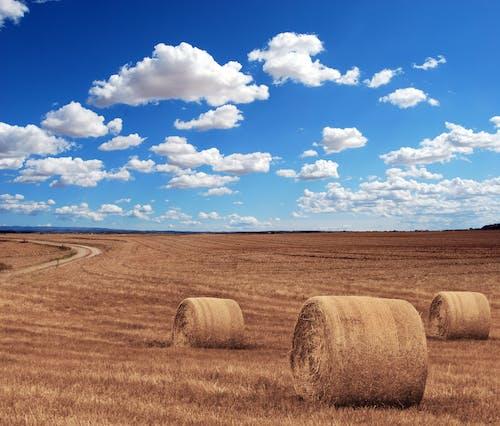 Gratis lagerfoto af bane, halm, hø, høst