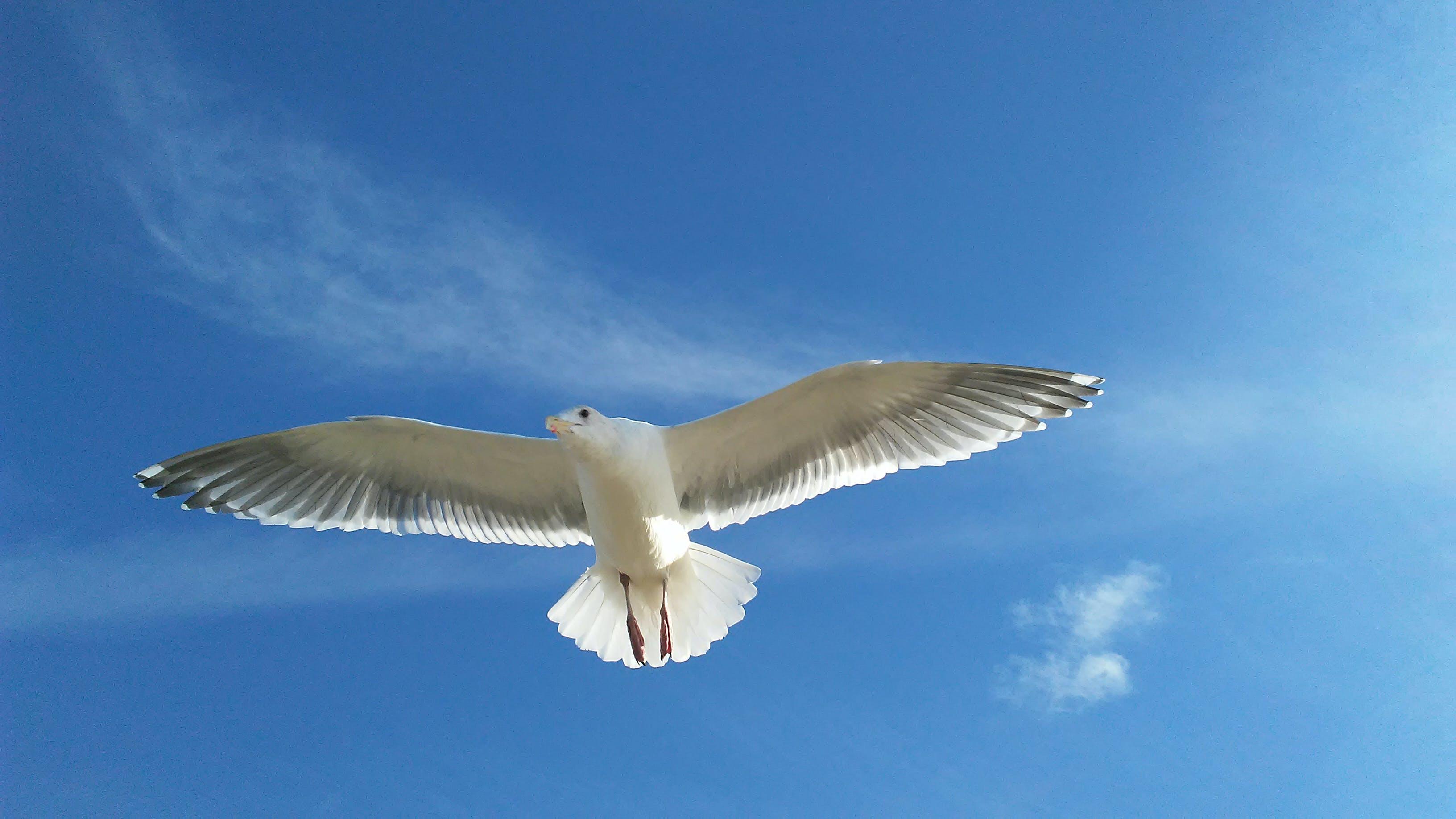 Free stock photo of beach, bird, seagull, sky