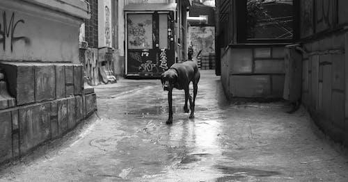 Foto stok gratis anjing, anjing jalanan, anjing sendirian, binatang