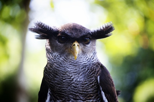 Free stock photo of bird, animal, head, owl