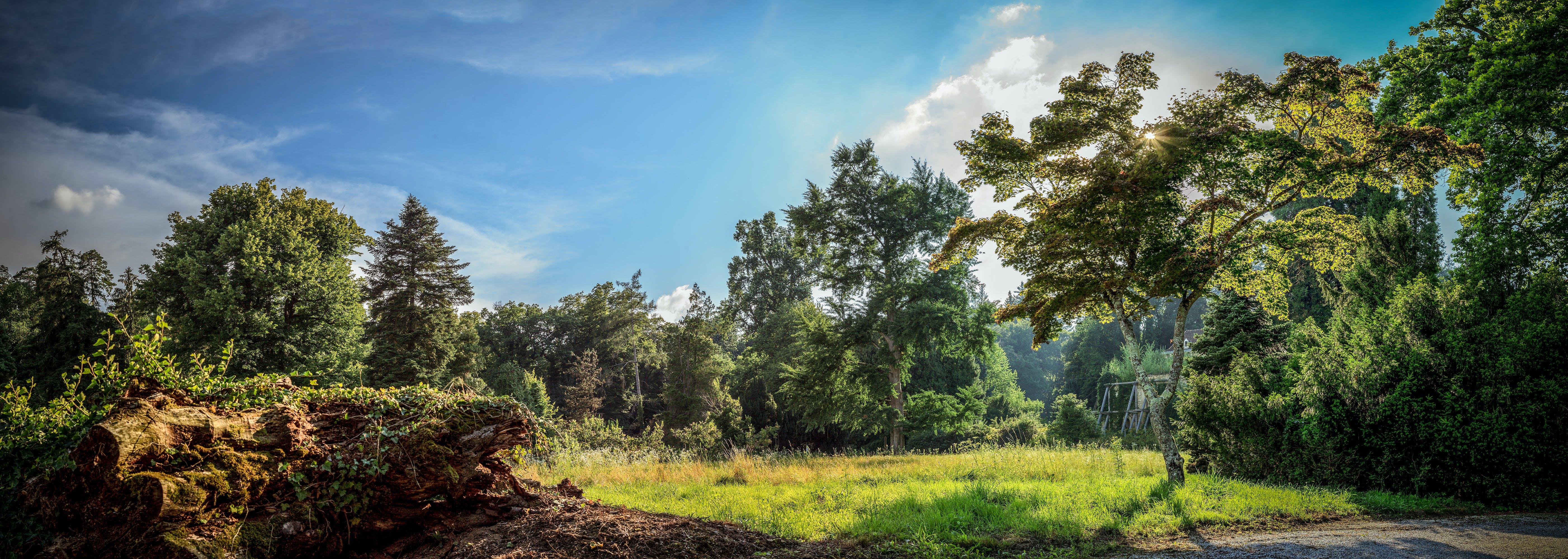 Free stock photo of arboretum, blue sky, clouds, croatia