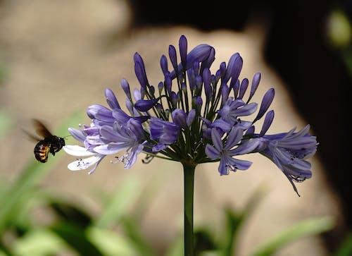 Photos gratuites de fleur, insecte