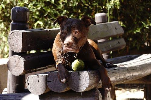 Photos gratuites de #dog, animaux de compagnie
